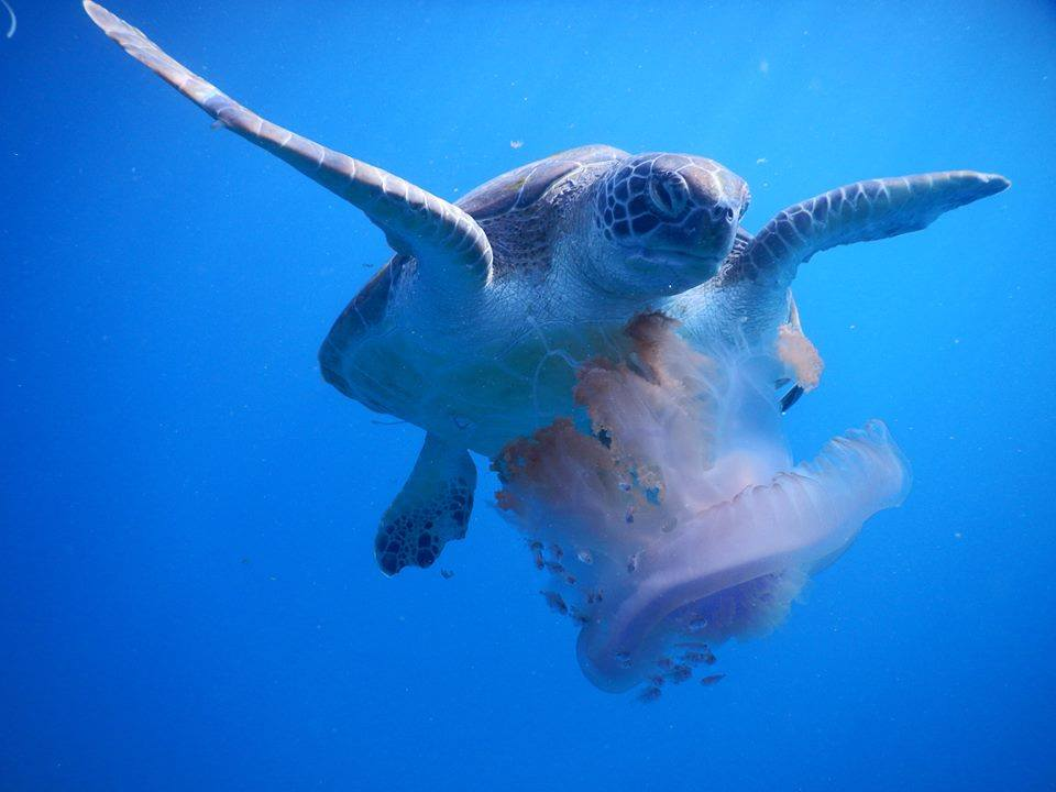 similan-under-water-star-fish+turtle