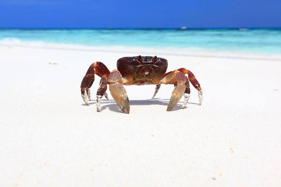 tachai-island-crab-on-the-island